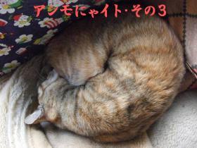 猫アンモナイト3