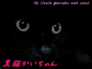黒猫かいたん