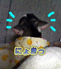 2006-3-3-1.jpg