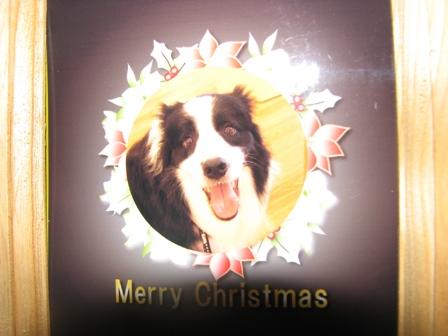 ジン君のクリスマスカード