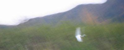IMG_3520鳥