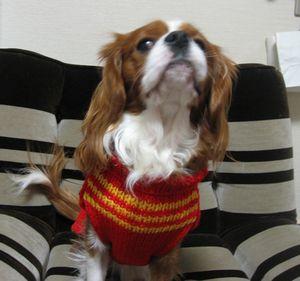 IMG_3663赤セーター