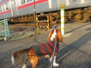 IMG_3685電車