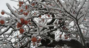 IMG_3851雪
