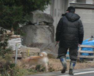 IMG_3948柴犬
