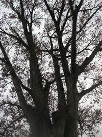 IMG_4003巨木