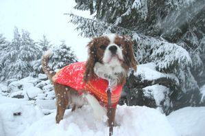 IMG_4007雪