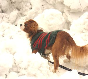 IMG_4059雪