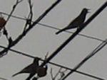 IMG_4134鳥