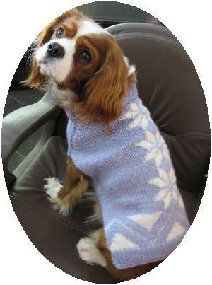 IMG_4137セーター