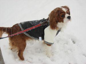 IMG_4268雪