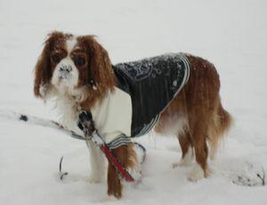 IMG_4270雪
