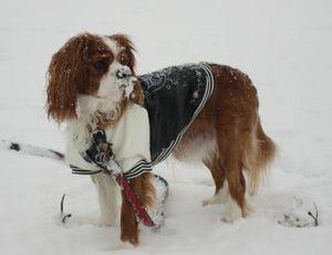IMG_4271雪