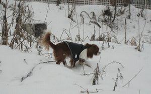 IMG_4326雪原