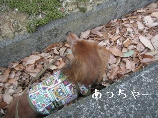 IMG_6895blog.jpg