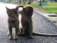 1185211632-cat-monkey_t.jpg