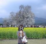 asosakura.jpg