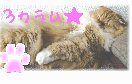 vanillava_makura_neko_3