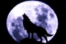 vanilla_va_wolves_Howling