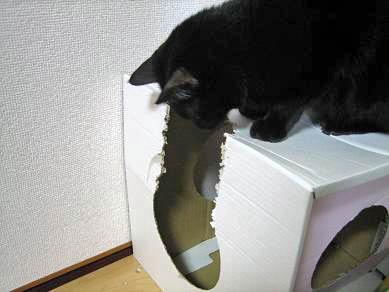 裂かれる猫ハウス