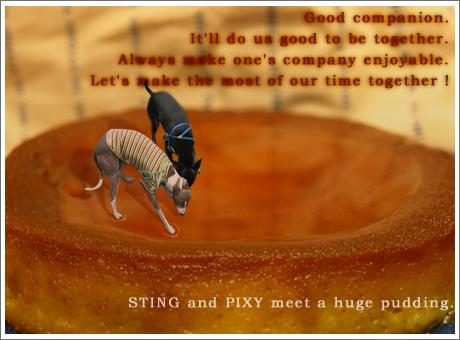 sting-pixy.jpg