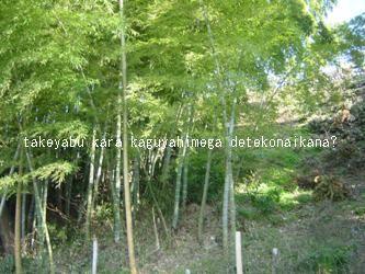 takeyabu
