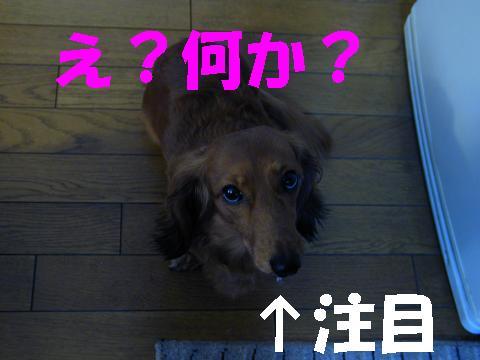 おまけちるこ