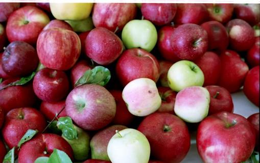 リンゴ1小