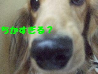 20071123かけるくん2