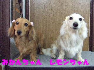 2007_1126みかんちゃんレモンちゃん