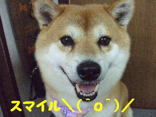 2007_1128ゆうくん2