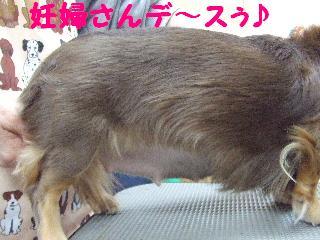 2007_1128チョコちゃん2