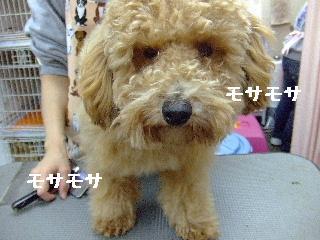 2007_1130ホーリーくん1