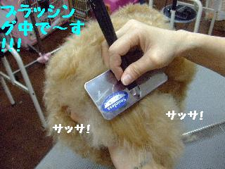 2007_1130ホーリーくん2