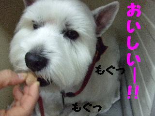 2007_1130みぃちゃん2