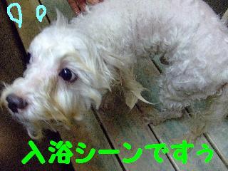 2007_1130ムサシくん