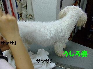 2007_1130ムサシくん3