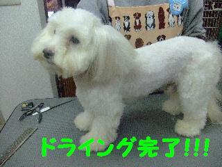 2007_1130ムサシくん4