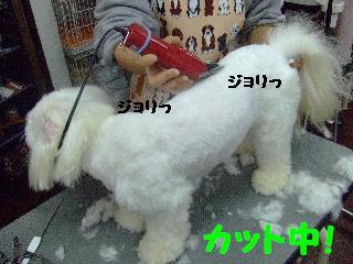 2007_1130ムサシくん5