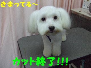 2007_1130ムサシくん6