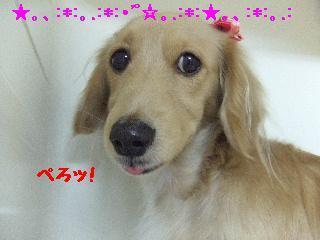 2007_1203ハナちゃん1