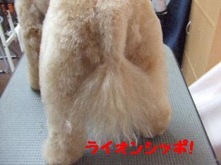 2007_1203リンちゃん1