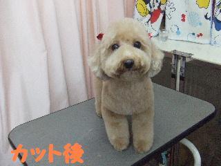 2007_1203リンちゃん2