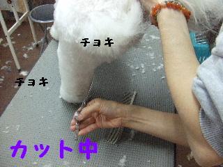 2007_1203レオンくん2