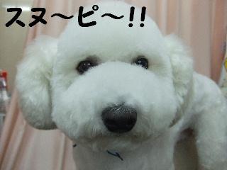 2007_1203レオンくん5