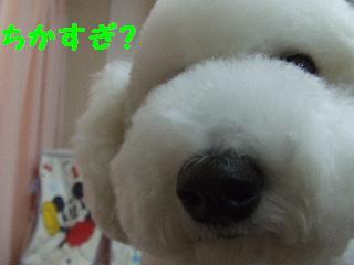 2007_1203レオンくん6