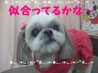 2007_1204エリちゃん1