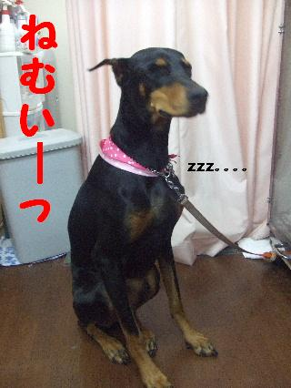 2007_1208かりんちゃん1