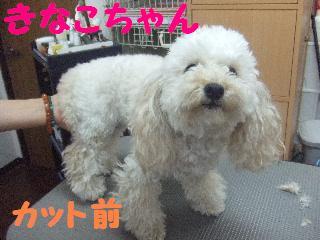 2007_1208きなこちゃん