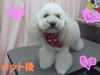 2007_1208きなこちゃん1